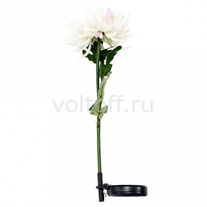 Цветок Feron